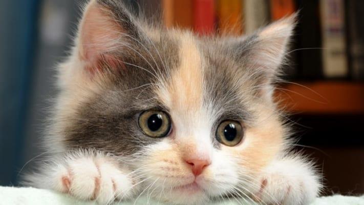 Mắt mèo biến đổi 3 lần trong ngày