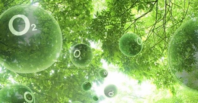Sấm sét có nitorat rất tốt cho thực vật